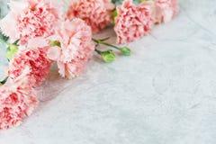 桃红色康乃馨花束 库存照片