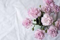 桃红色康乃馨(大角度) 库存照片