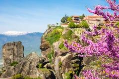 桃红色开花和伟大的Meteoro修道院分支在背景的迈泰奥拉 库存图片