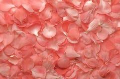 桃红色开花瓣纹理 免版税图库摄影