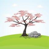 桃红色开花的日本花 樱花 库存图片