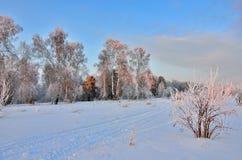 桃红色微明在冬天森林里-美好的冬天风景 图库摄影