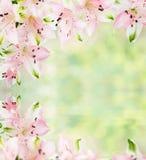 桃红色德国锥脚形酒杯框架在水中开花与反射 免版税库存照片