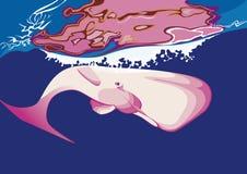 桃红色抹香鲸` s游泳 图库摄影