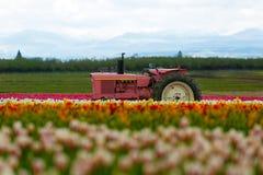 桃红色拖拉机 免版税库存照片
