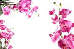 桃红色斑纹的兰花花框架  免版税库存图片