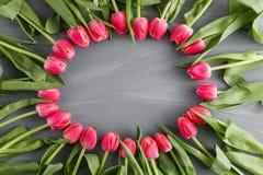 桃红色新春天郁金香植物的艺术花卉背景圆的框架花圈野花概念妇女` s天问候 库存照片