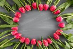 桃红色新春天郁金香植物的艺术花卉背景圆的框架花圈野花概念妇女` s天问候 库存图片