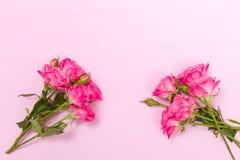 桃红色新玫瑰色分支和空的空间在淡色背景隔绝的文本的 免版税库存照片