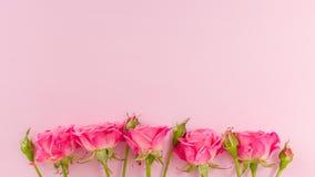 桃红色新玫瑰色分支毗邻并且倒空在淡色背景隔绝的文本的空间 免版税库存图片