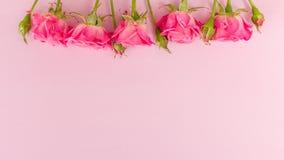 桃红色新玫瑰色分支毗邻并且倒空在淡色背景隔绝的文本的空间 图库摄影