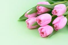 桃红色新鲜的郁金香花 免版税库存图片