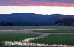 桃红色日出在水草反射了在鹈鹕小河在黄石国家公园在怀俄明 免版税库存照片