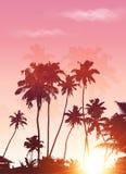 桃红色日落棕榈剪影海报背景 库存图片
