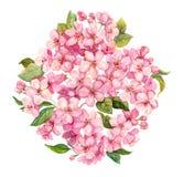 桃红色春天开花-佐仓,苹果花开花 水彩 皇族释放例证