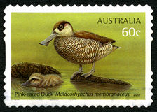 桃红色有耳的鸭子澳大利亚邮票 免版税图库摄影