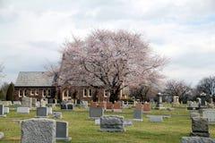 桃红色树在公墓 库存图片