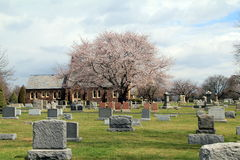 桃红色树在公墓 图库摄影