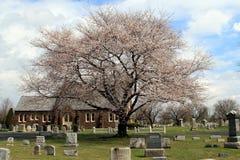 桃红色树在公墓 免版税库存图片