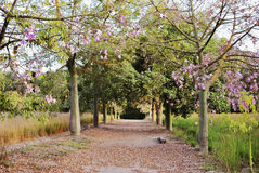桃红色树在春天 免版税图库摄影