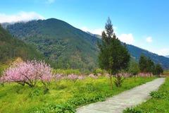桃红色桃树美好的风景  免版税图库摄影