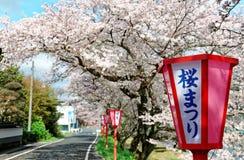 桃红色樱桃树开花(佐仓Namiki)和日本式沿乡下公路的灯岗位浪漫拱道  免版税库存照片