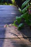 桃红色檀香山爬行物,庭院木头道路 免版税库存图片
