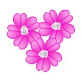 桃红色欧蓍草花或Achillea Millefolium花 免版税图库摄影