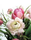 桃红色毛茛、毛茛属或者牡丹 免版税库存照片
