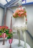 桃红色水芋属lilly植物的装饰和钝汉自花温室, 免版税库存图片