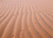 桃红色沙子 免版税库存图片