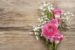 桃红色波斯毛茛花,小苍兰花 库存照片