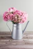 桃红色波斯毛茛花 在金属灰色葡萄酒喷壶,拷贝空间的卷曲牡丹毛茛属 免版税图库摄影
