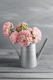 桃红色波斯毛茛花 在金属灰色葡萄酒喷壶,拷贝空间的卷曲牡丹毛茛属 免版税库存照片