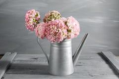 桃红色波斯毛茛花 在金属灰色葡萄酒喷壶,拷贝空间的卷曲牡丹毛茛属 库存照片