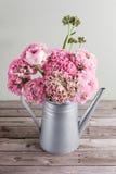 桃红色波斯毛茛花 在金属灰色葡萄酒喷壶,拷贝空间的卷曲牡丹毛茛属 库存图片