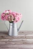 桃红色波斯毛茛花 在金属灰色葡萄酒喷壶,拷贝空间的卷曲牡丹毛茛属 免版税库存图片
