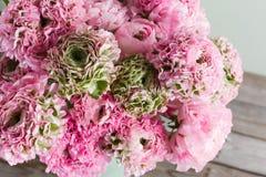桃红色波斯毛茛花 在绿色葡萄酒罐头,拷贝空间的卷曲牡丹毛茛属 免版税库存照片