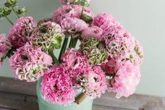 桃红色波斯毛茛花 在绿色葡萄酒罐头,拷贝空间的卷曲牡丹毛茛属 免版税图库摄影