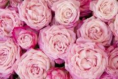 桃红色浪花玫瑰花束  免版税库存图片