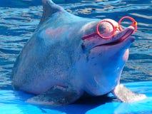 桃红色海豚获得乐趣 免版税库存照片