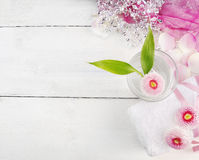 桃红色温泉集合,雏菊在杯开花水 免版税图库摄影