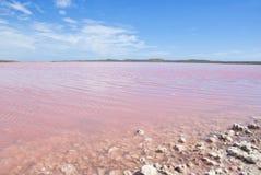桃红色湖,澳大利亚西部 图库摄影