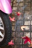 桃红色滑行车和红色弄湿了叶子 免版税库存照片
