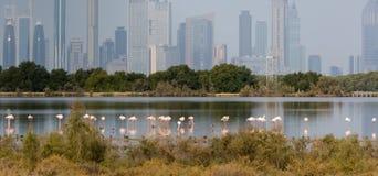 桃红色火鸟在大城市的背景中 库存图片