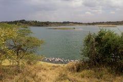 桃红色火鸟在湖 库存照片