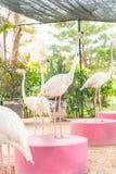 桃红色火鸟群 库存照片