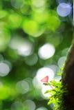 桃红色烧伤杯,真菌杯 免版税图库摄影