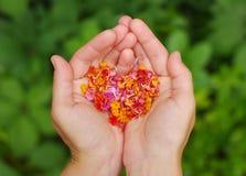 从桃红色热带花的心脏在女性手上 免版税图库摄影