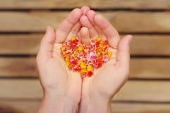 从桃红色热带花的心脏在女性手上 库存照片